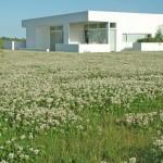 Hvidkløver hvidt hus